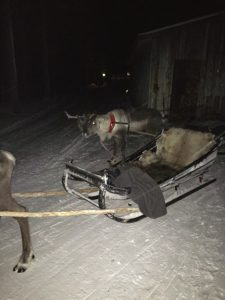 Reindeer Sleigh Ride in Finland