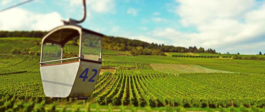 Vineyards of Rüdesheim